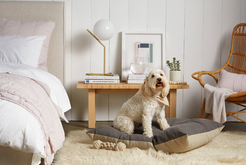 Parachute Is Now Selling Dog Beds, So You Can Pamper Your Pup Even More