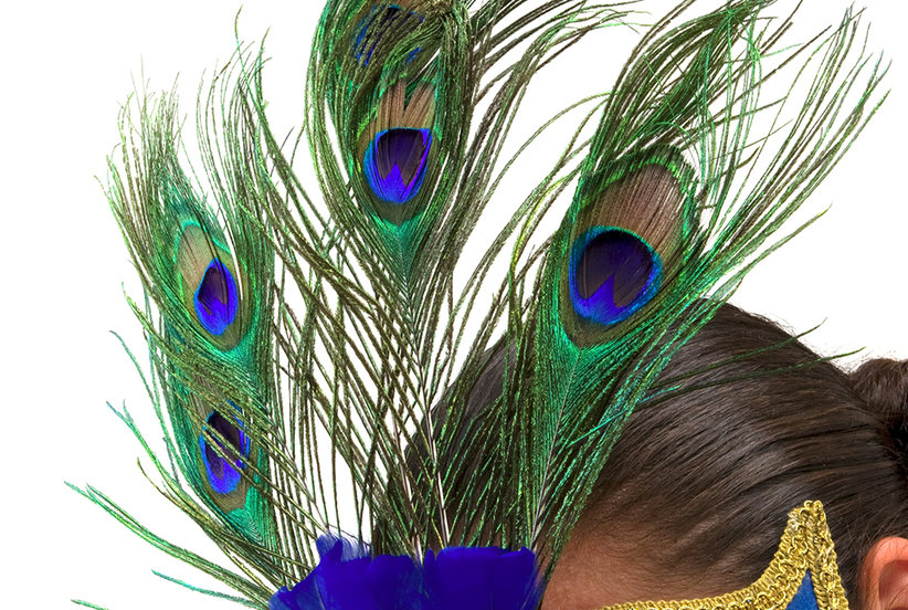 essay on peacock in english Peacock is our national bird  short paragraph on the peacock  essay on peacock (national bird of india) search importantindiacom.