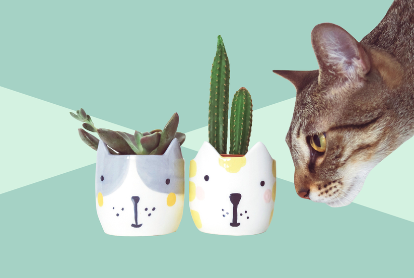 10 Houseplants That Are Safe for Cats and Dogs