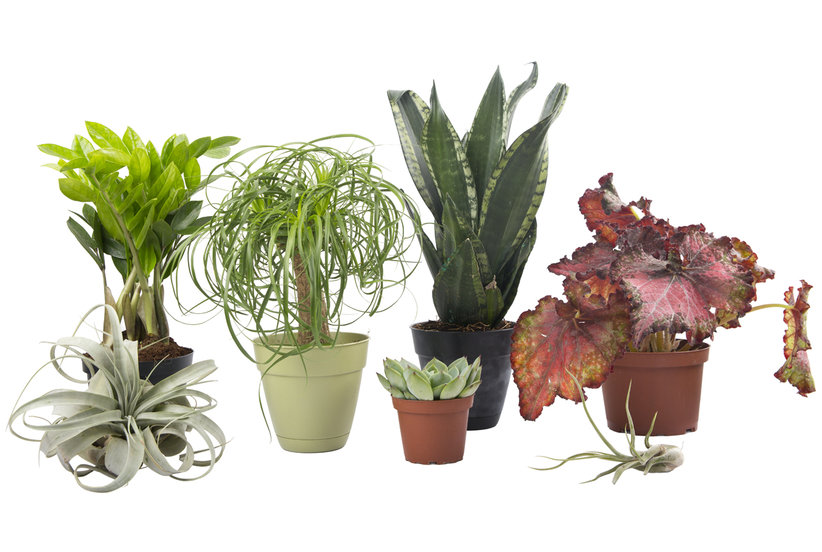 Low maintenance indoor plants real simple for Low maintenance indoor trees