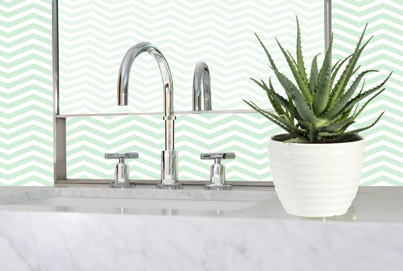 7 Humidity-Loving Plants That Will Thrive in Your Bathroom