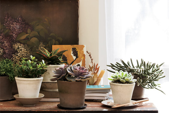 & Decorating With House Plants