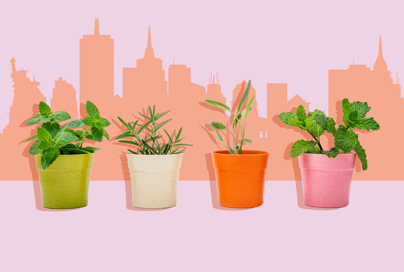 6 Simple Steps for Growing Greens, Herbs, and Potted Plants on Your Rooftop
