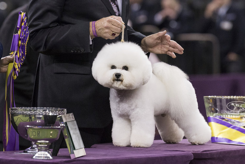 7 Epic Photos of 2018 Dog Show Winners to Make Your Day