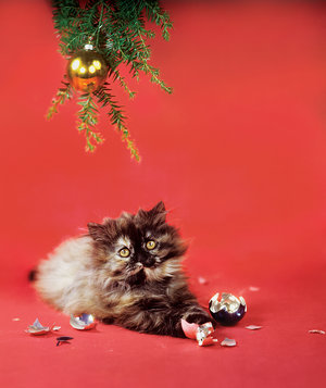 cat-broken-christmas-ornament