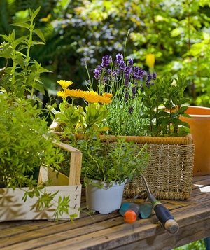 flower gardening for beginners. flowers-gardening-tools flower gardening for beginners