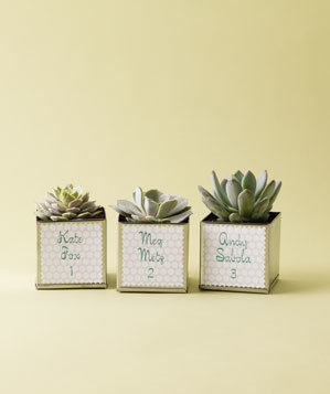 Simple Succulents 10 Creative Wedding Favor Ideas Real Simple