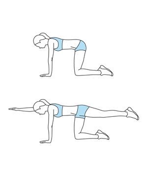 move 1 bird dog get stronger abs in 15 minutes real