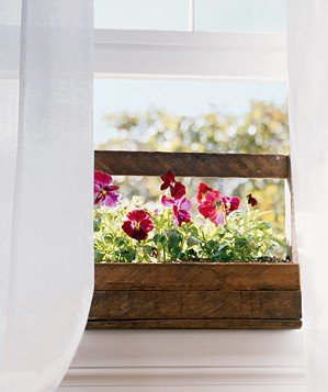 flowers-window-sill