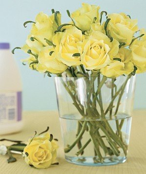 yellow-flowers-vase