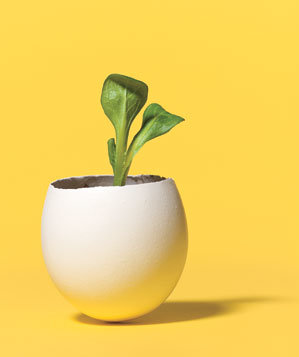 seedling-in-eggshell