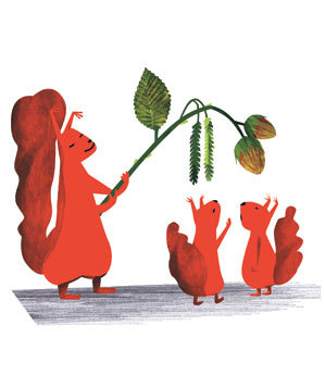 squirrels-acorns-illustration-1