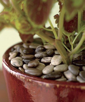 stones-used-to-insulate-a-potted-plant