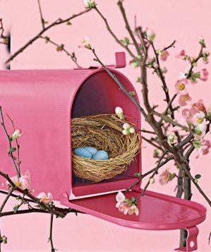 mail-box-used-as-bird-house