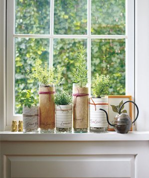 vase-used-to-grow-herbs