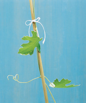 floss-used-to-tie-vine-to-trellis