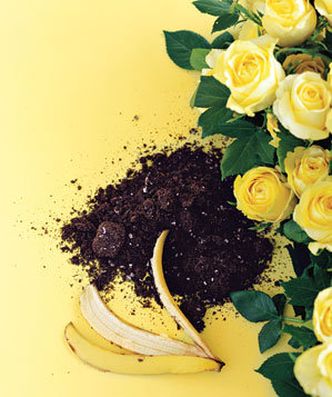 banana-peel-soil-roses