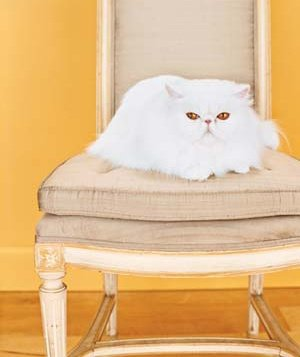0602cat-chair