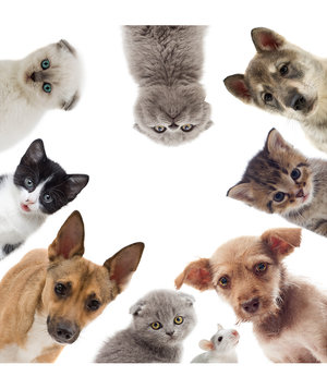 puppies-kittens-rat-pets