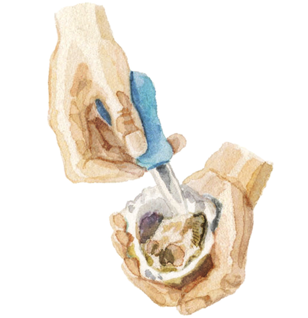 how-to-shuck-oysters