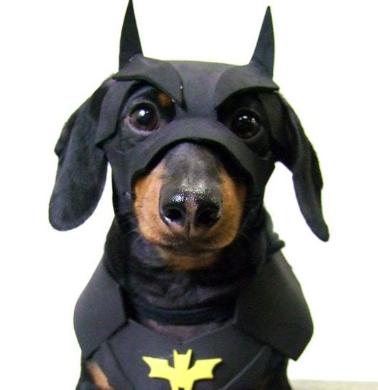 pet-halloween-costumes-on-pinterest