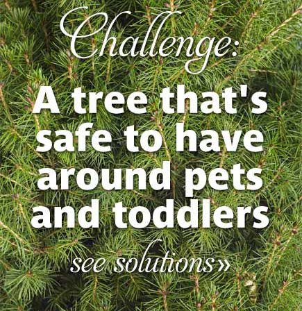 Challenge: A Tree That's Safe to Have Around Pets