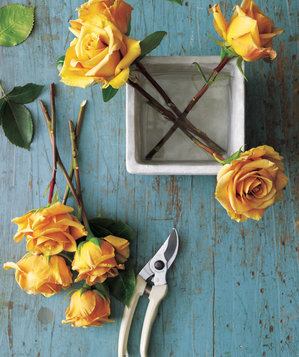 Yellow roses and cutters laying on a table
