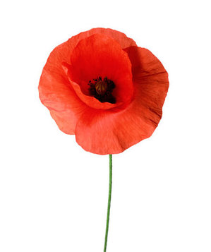 Poppy | 6 Pretty Flowers and Their Symbolic Meanings - Real Simple