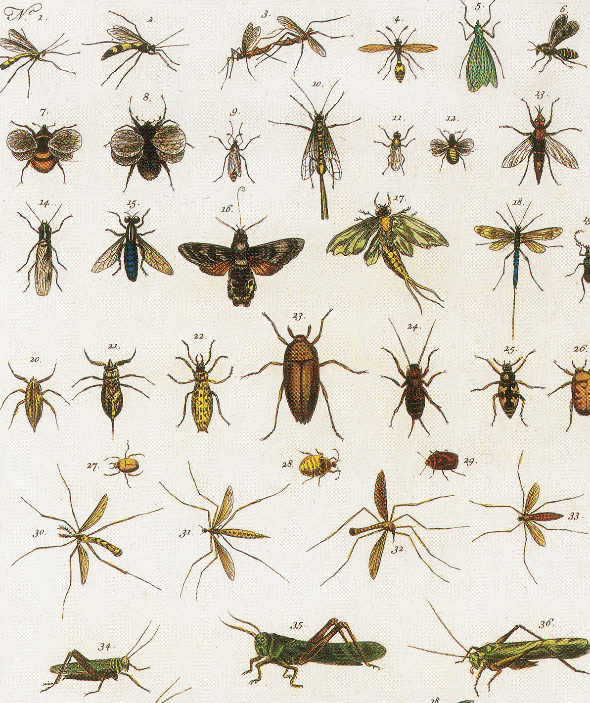 insects-illustration-1734