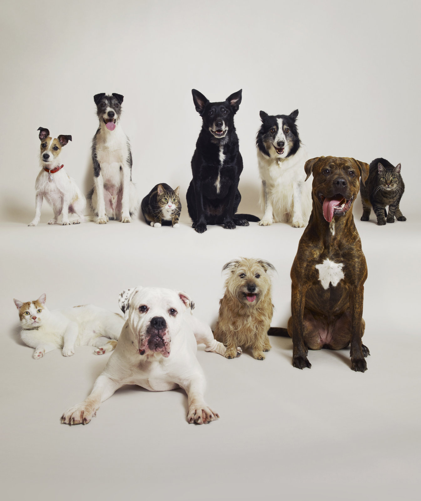 dogs-cats