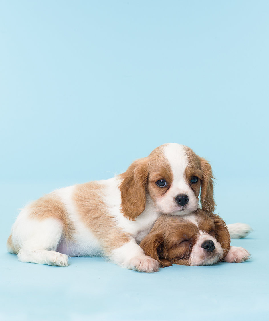 cute-puppies-resting