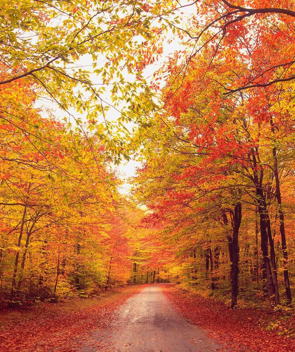 fall-foliage-path
