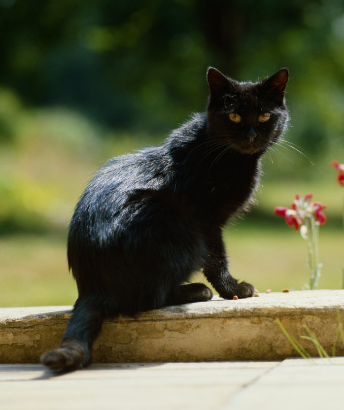 black-cat-outdoors