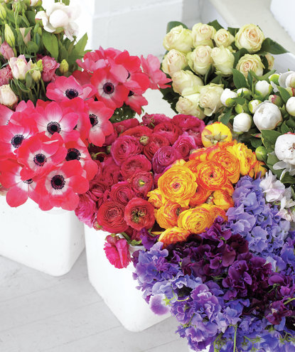 color-assortment-of-flowers
