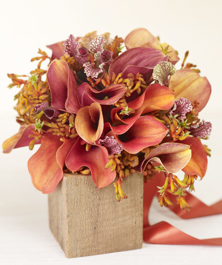 orange-calla-lilies