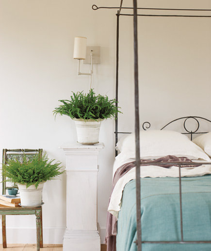 green the bedroom with ferns decorating with house plants real