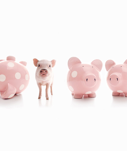 pig-with-piggy-banks