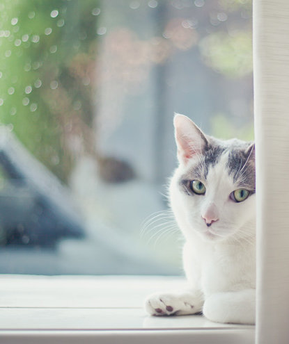 cat-windowsill