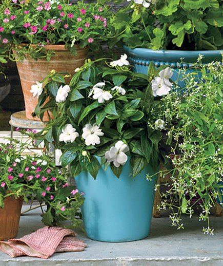 You Know New Guinea Impatiens is a Goofproof Outdoor Plants ?