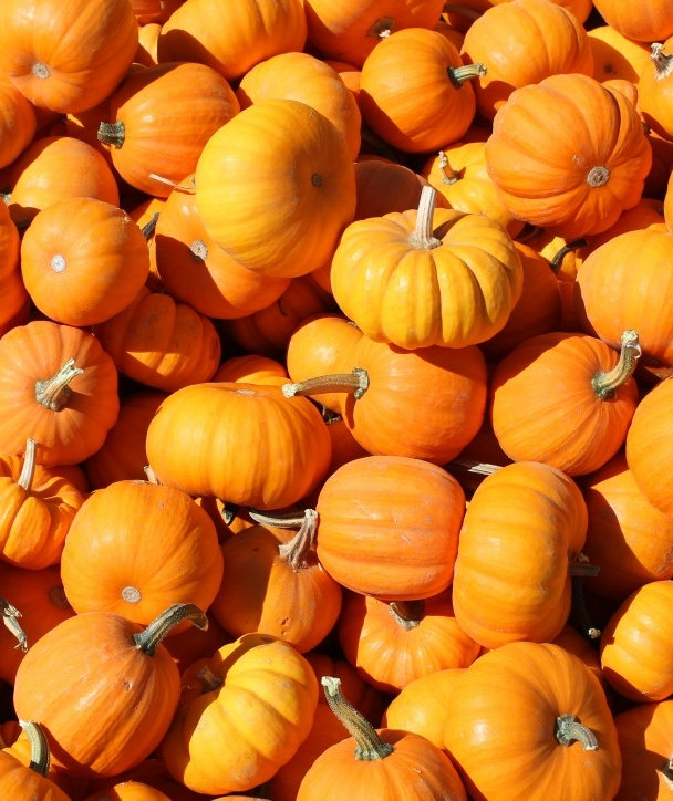 how-to-use-canned-pumpkin