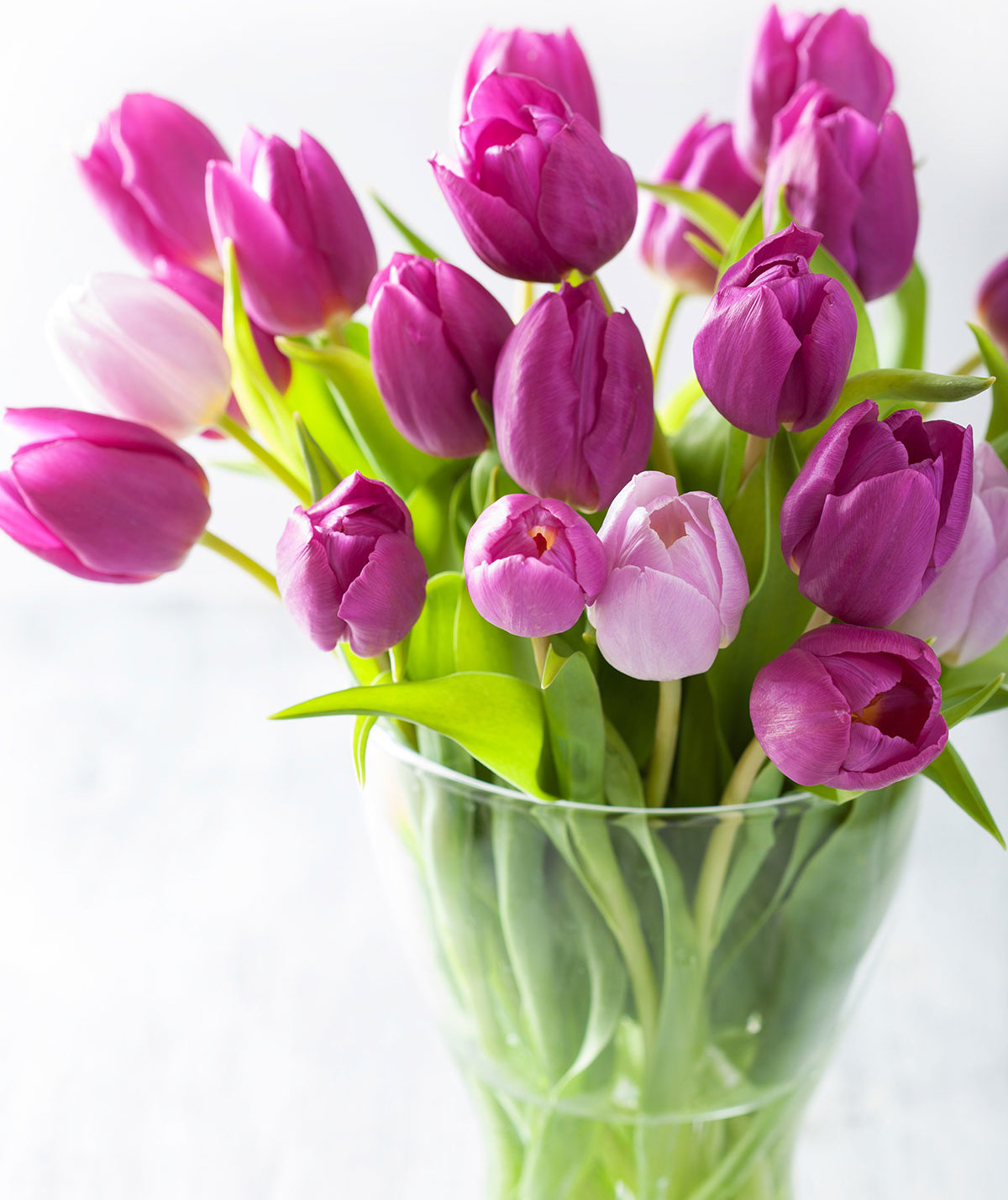 purple-tulip-arrangement