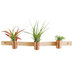 leather-copper-air-plant-holder