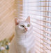 white-cat-window-blinds