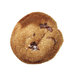 chocolate-chunk-gingersnaps
