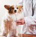 dog-veterinarian
