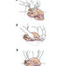 how-to-truss-turkey