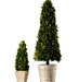 boxwood-cone-topiaries