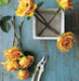 yellow-rose-table-cutters