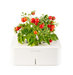 click-grow-plants-tomato
