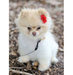 little-dog-red-flower